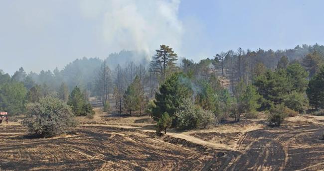 Konya'da yakılan anızlar ormanlık alana sıçradı