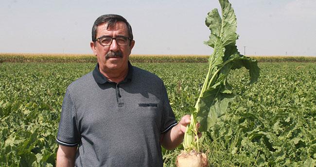 """Konya Pancar ve Tarım Ürünleri Üreticileri Derneği: """"Şeker fabrikaları yaşatılmalı"""""""
