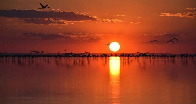 Tuz Gölü, nesli tükenmekte olan Bozkır Kartalı ve Toy Kuşlarına ev sahipliği yapıyor