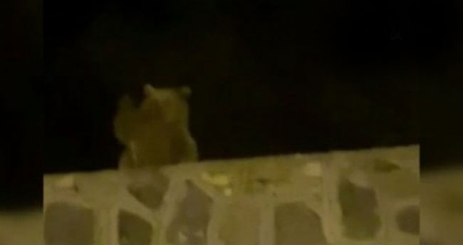 Sarıkamış'ta ayı vatandaşa el salladı