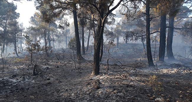 Karaman'da çıkan orman yangınında 10 dönüm alan zarar gördü