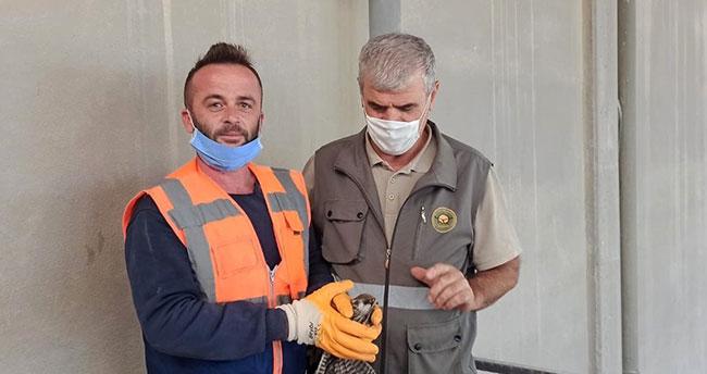 Konya'da bulunan yaralı gökçe delice tedavi edilecek
