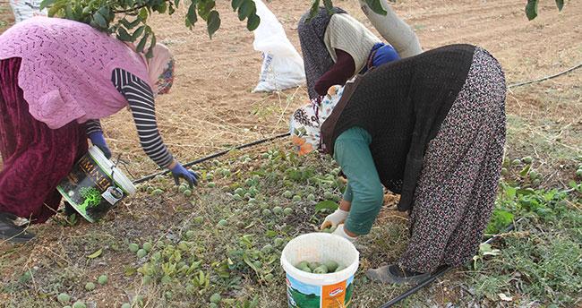 Annesinin memleketine olan Konya'da kurduğu ceviz bahçeleriyle tarımsal üretime katkı sağlıyor