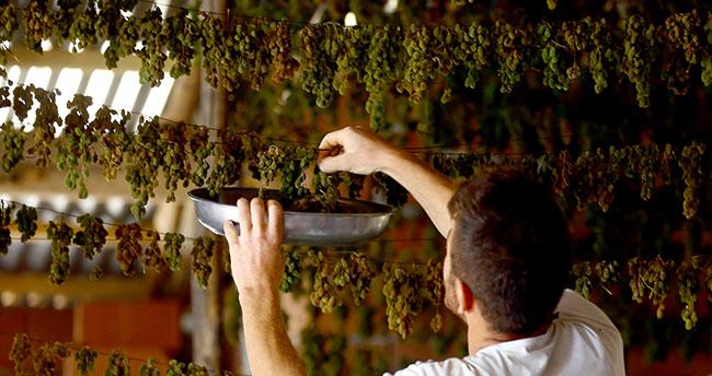 Konya'da tavan arasında kurutulan yeşil kuru üzüm benzersiz tadıyla ilgi görüyor