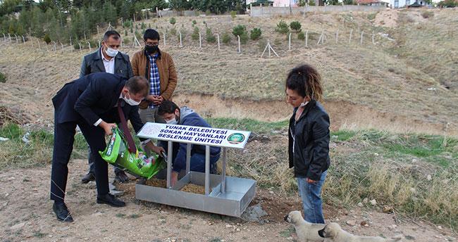 Konya Yunak'ta sokak hayvanları için beslenme noktaları oluşturuldu