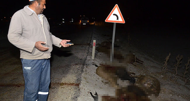 Konya'da otomobil koyun sürüsüne daldı, 30 koyun telef oldu