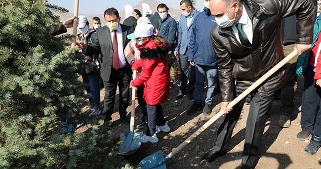 Konya'da 310 bin karaçam fidanı dikildi