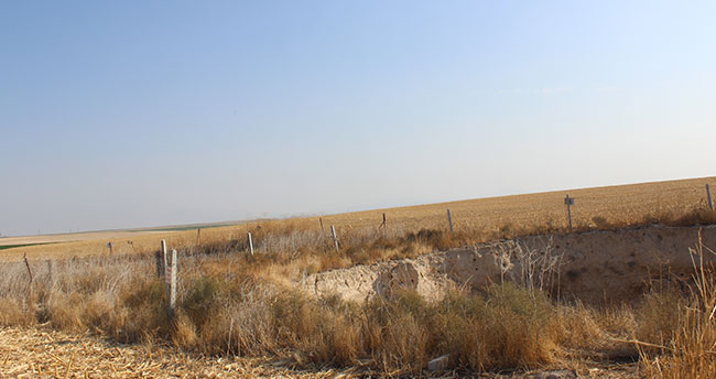 Konya'da çiftçiler tarlalarında oluşan 2 obruğa rağmen tarıma devam ediyorlar
