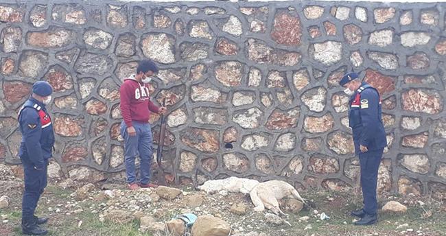 Konya'da sokak köpeklerini öldüren kişi yakalandı! Cezası 4 bin 150 lira