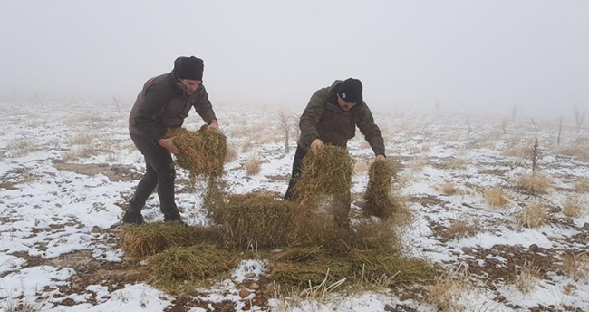Konya ve Aksaray'da yaban hayatına yem desteği