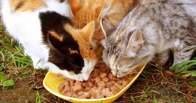Kadıköy Belediyesi sokak hayvanları için mama alacak
