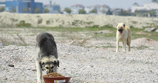 Konya Büyükşehir Belediyesi katkı payı ödeyerek sokak köpeklerine evde bakım hizmeti sağlıyor