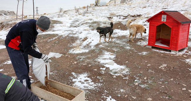 Meram Belediyesi, sokak hayvanlarını yalnız bırakmıyor