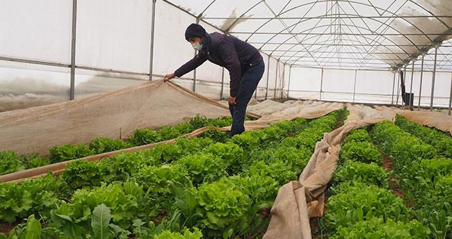 Konyalı çiftçi, arkadaşlarının olumsuz görüşlerine rağmen sera kurdu