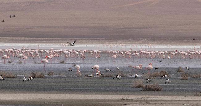 Suların çekilmesiyle birlikte Konya'daki Düden Gölü'ndeki flamingo sayısı düştü
