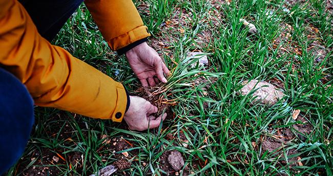 Son yağışlar kuraklık alarmı veren Konya Ovası'nda çiftçinin yüzünü güldürdü
