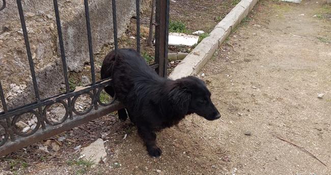Konya'da mezarlığın demir kapısına sıkışan köpeği itfaiye ekipleri kurtardı
